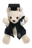 Graduation Bear Stock Photo