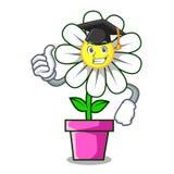 Graduation daisy flower character cartoon. Vector illustration Royalty Free Stock Images