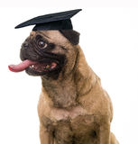 Graduation Day Royalty Free Stock Photography