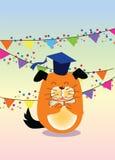 Graduation, dog Stock Images