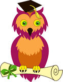 Graduation owl. Owl   with diploma in the graduation cap. Vector Illustration Stock Photography