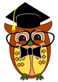 Graduation Owl Stock Images