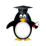 Graduation penguin Royalty Free Stock Photography