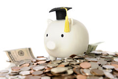 Graduation Piggy Royalty Free Stock Photography