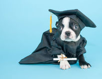 Graduation Puppy Royalty Free Stock Photos