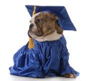 Graduazione dell'animale domestico Fotografia Stock Libera da Diritti