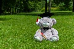 Graduierter Bachelor-Abschluss des Teddybären Stockfotografie