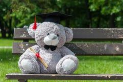 Graduierter Bachelor-Abschluss des Teddybären Lizenzfreie Stockfotos