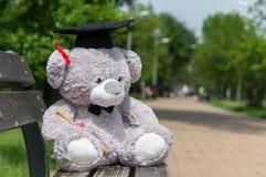 Graduierter Bachelor-Abschluss des Teddybären Lizenzfreies Stockbild