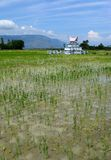 Graf op padieveld, Indonesië Royalty-vrije Stock Foto's