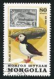 Graf Zeppelin och lunnefågel arkivbilder