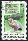 Graf Zeppelin och snöig uggla royaltyfria bilder