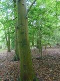 Graffit drzewo Obraz Stock