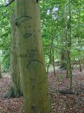 Graffit Tree. Tree trunk engraved with graffiti royalty free stock photo