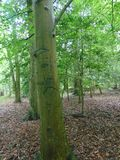 Graffit Tree. Tree trunk engraved with graffiti stock image