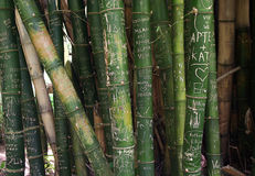 Graffiti on Bamboo Royalty Free Stock Image