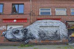 Rat; Graffiti on brick wall and abandoned shop windows, Doel, Belgium. Graffiti painting, depicting a huge rat, on abandoned house in ghost town Doel, East royalty free stock photos