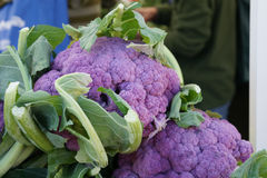 Graffiti cauliflower. Brassica oleracea var. botrytis, cultivar with purple compact heads, rich in nutrients particularly anothocyanins and antioxidants royalty free stock photos