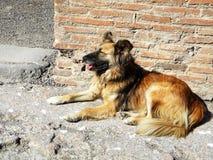 Graffiti dans la cour de Lviv, Ukraine, le 3 septembre 2011 chien sur les ruines à Pompeii image stock