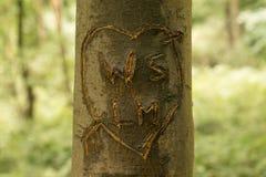 Graffiti dell'albero Fotografia Stock