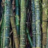 Graffiti di bambù Fotografie Stock