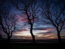Graffiti ed alberi della linea costiera al tramonto Immagine Stock