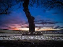 Graffiti ed albero della linea costiera al tramonto Immagine Stock