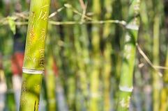 Graffiti en bambou avec le mot 'amour' découpé Photographie stock