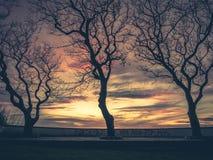 Graffiti et arbres de littoral au coucher du soleil Images libres de droits