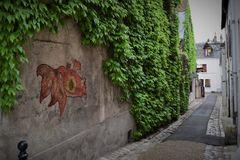 Graffiti gold fish on the wall covered with leaves royalty free stock photo