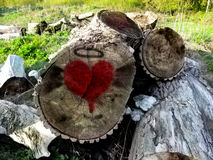 Graffiti of lovers on stumps in the forest. A red heart drawn on the cut of the tree Stock Photos