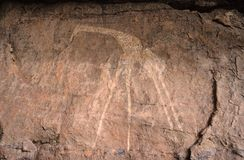 Graffiti van de giraf Stock Afbeeldingen