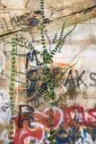Graffiti on wall. Stock Image