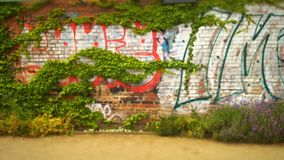 Graffiti. On a wall, ivy growing over it Stock Photos