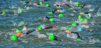 Competitors swimming in at the end of the swimming stage at the beginning of Triathlon. Royalty Free Stock Photo