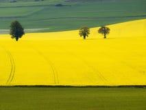 Grafic形成一个黄色和绿色领域。 免版税图库摄影