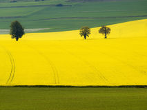 Grafic forms a yellow and green field. This image was made in France province la Somme in May when all fields became a stuning view on grafic and color Royalty Free Stock Photography