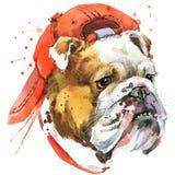 Grafici della maglietta del bulldog del cane insegua l'illustrazione del bulldog con il fondo strutturato acquerello della spruzz illustrazione di stock