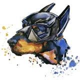 Grafici della maglietta del cane del doberman L'illustrazione del cane del doberman con l'acquerello della spruzzata ha struttura illustrazione di stock