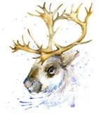 Grafici della maglietta dell'acquerello della renna, Illustrazione della renna con il fondo strutturato dell'acquerello della spr Fotografia Stock