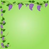 Grafico di progettazione dell'uva di vettore Fotografia Stock