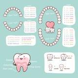 Grafico umano di anatomia del fumetto del dente Fotografia Stock