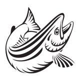 Graficzna łosoś ryba, wektor Obrazy Stock