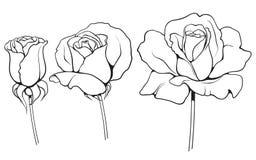 Graficzne róże ustawiają 02 Zdjęcie Stock