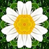 Graficzni elementy robić stokrotka kwiatu obrazek royalty ilustracja
