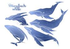Graficzni humpback wieloryby ilustracji