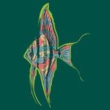 Graficzny akwarium skalar Lub Angelfish pojęcie Obraz Stock