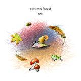 Graficzny jesień lasu set Ilustracja Wektor