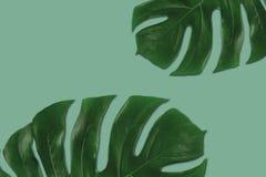Graficzny skład zieleni troical liście Obraz Stock