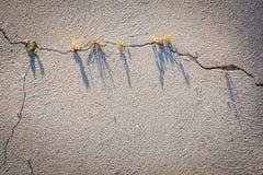 Grafiek door een barst in droog zand wordt gemaakt dat stock foto